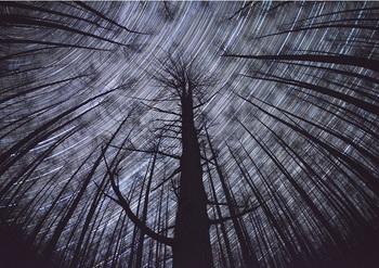 落葉松林と星景