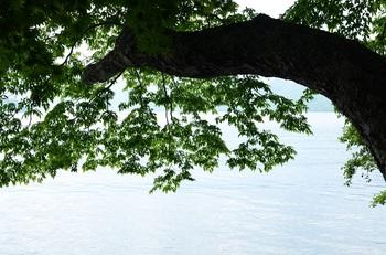 中禅寺湖と新緑