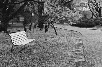 散る桜残る・・・・