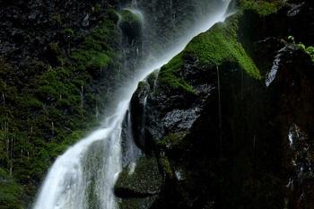 裏見の滝岩苔