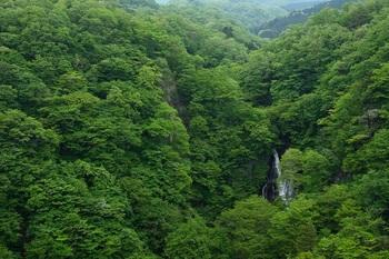 新緑の中の霧降の滝